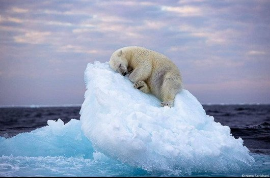 """Fotografija """"Poslednji ledeni breg"""""""