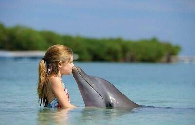 Delfini spasioci