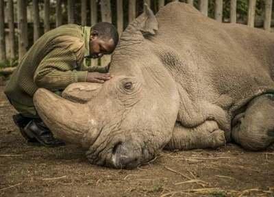 Poslednja fotografija poslednjeg mužjaka severno belog nosoroga