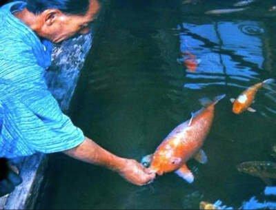 Riba koja je ihtiolozima zadala prave glavobolje