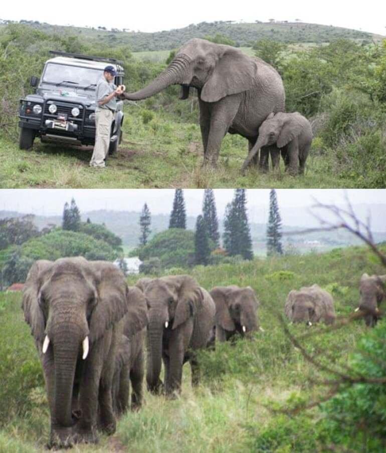 Šaptač slonovima